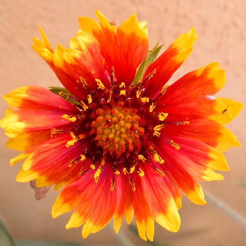 flowers garden (8 of 9)