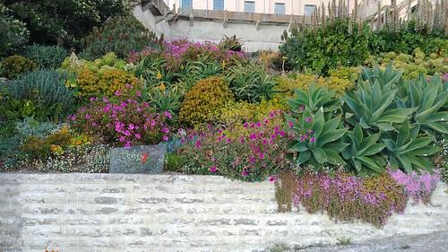 Alcatraz Garden Wall