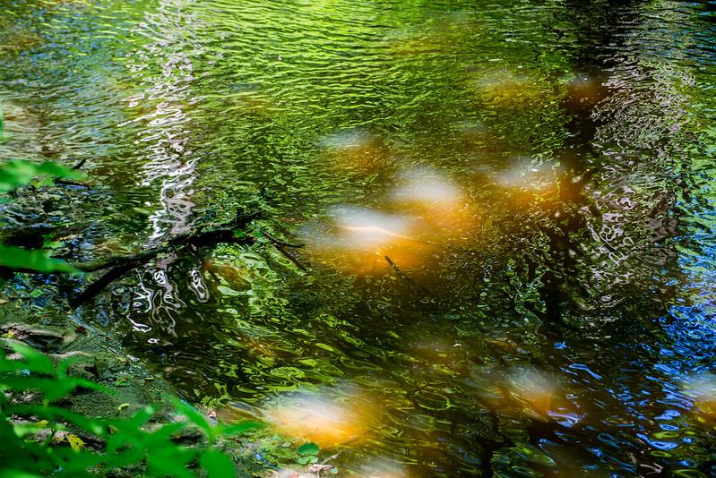 Bicentennial Woods Nature Preserve - June 7, 2017