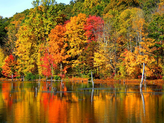 Fall Colors Reflected