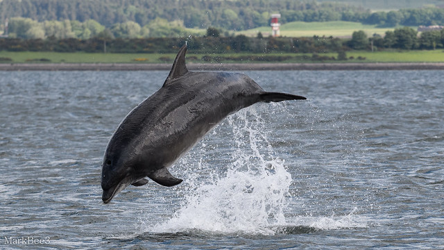 Bottlenose dolphin, Nikon D500, AF-S Nikkor 70-200mm f/4G ED VR