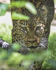 Prowling