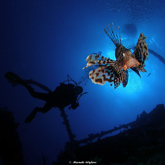 Lionfish | Red Sea | 2005.05.19