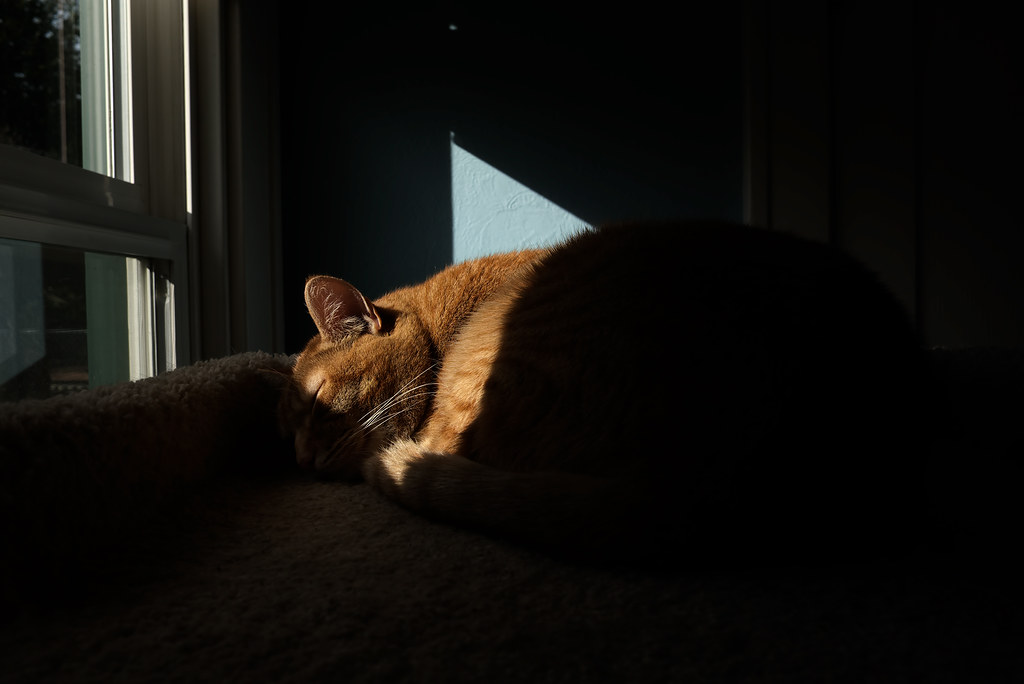 A sliver of light illuminates Sam as he sleeps on the top of the cat tree