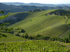 Piemont - Langhe