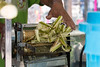 Frischer Zuckerrohr - Fresh sugarcane