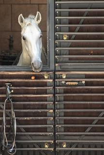 Image of Hofburg Palace. austria equestrian hofburg horse lipizzaner spanishridingschool stables stalburg vienna wien