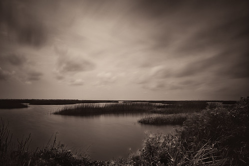 bw blackwhite blackandwhite bulb coastal estuary firstlight grass hightide longexposure marsh marshland monochrome oquinnestuary saltmarsh seagrass sepia water wetlands hitchcock texas unitedstates us