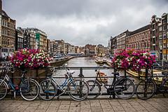 Amsterdam Colour