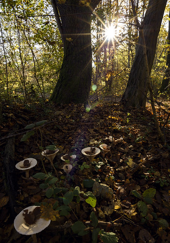 munich münchen bavaria bayern pilze natur nature leaves autumn herbst sunrays light colourful sunset trees wood forest nikon d810
