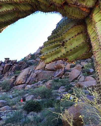 arizona arizonawonders pinnaclepeak scottsdale scottsdalearizona saguaro cactus cacti desert southwest