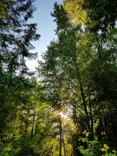 westlynn lynnvalley northvancouver britishcolumbia canada sunset evening bluesky spring may trees leaves branches light shadows shade sunlight green brown gold nature scenery view