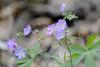 Wildflowers-43574.jpg