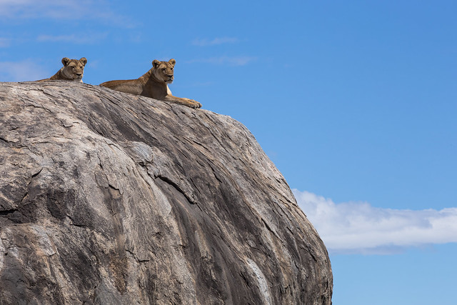 Gazing Outward - Lion Rock