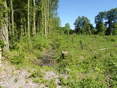 RNR de l'Escaut Rivière (19)