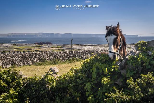 Inisheer, Irish: Inis Oírr, Aran Islands, County Galway, Ireland