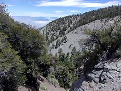 Steep North Backbone Trail Under Pine Mtn Summit (9,648')- 6/10/17