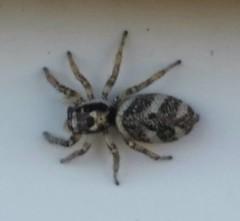 Arachnids, Myriapods, and Crustaceans