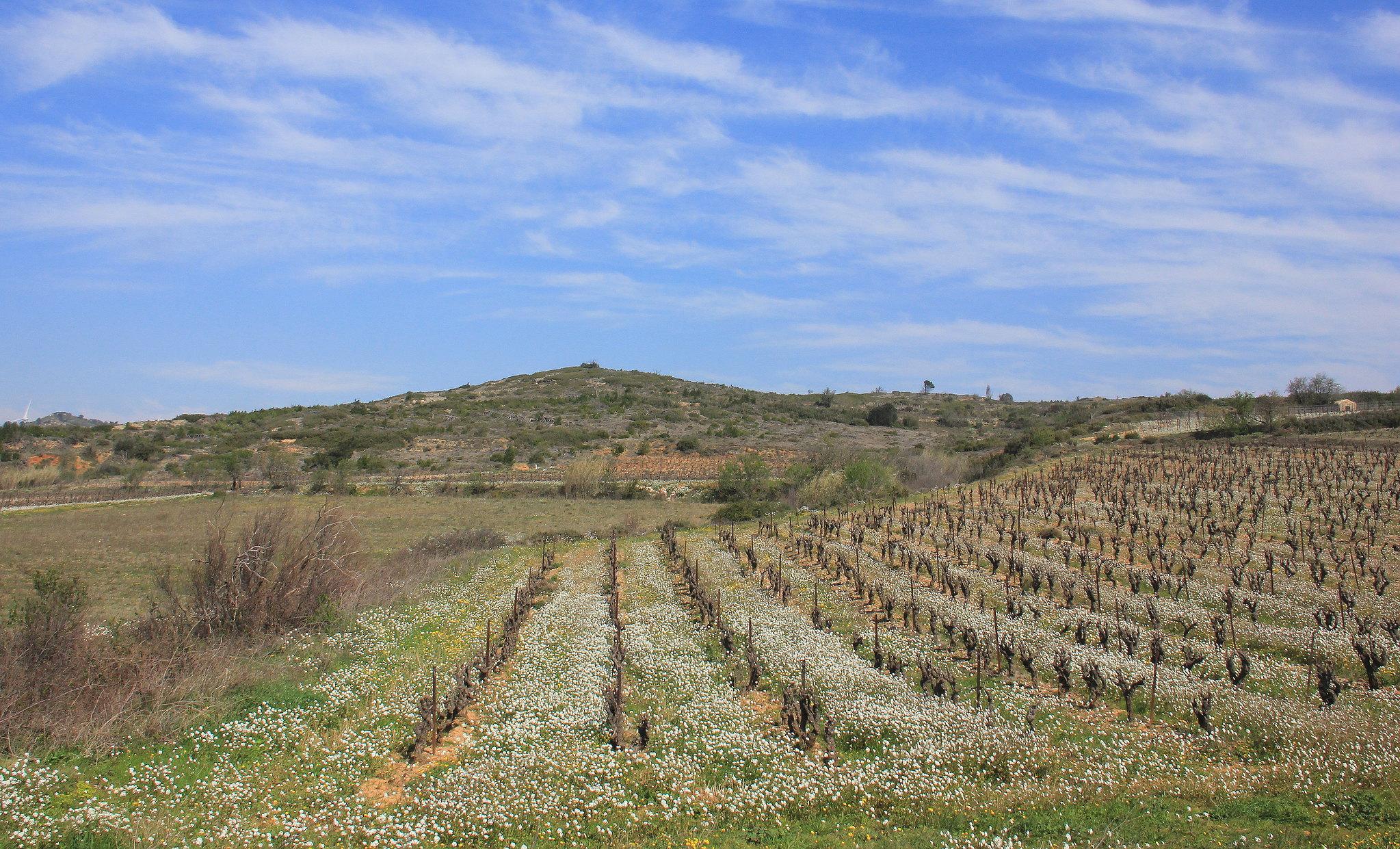 Vineyards of France