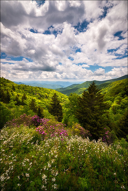 North Carolina Blue Ridge Parkway Scenic Landscape NC Appalachian Mountains