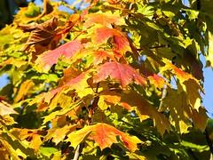 Blätter (16)