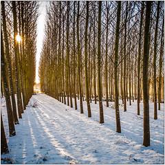 Snow. Trees.