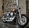 Harley-Davidson XL Sportster 1200 Custom 2013 - 15