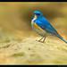 Beauty of The Nature by asifsherazi