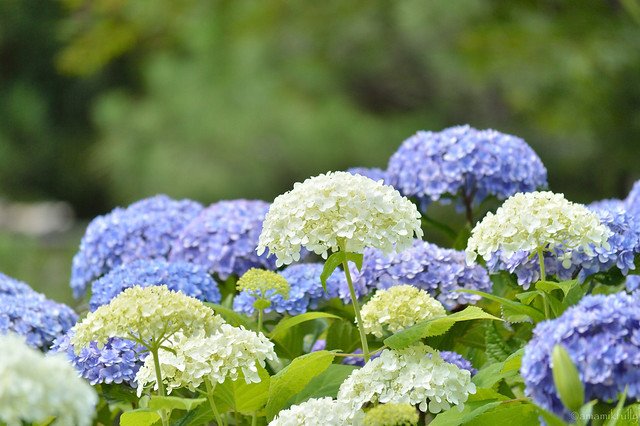 初夏の花庭園