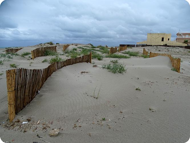 Denuncian daños en los sistemas dunares de La Manga por la extracción de arenas para alimentar playas