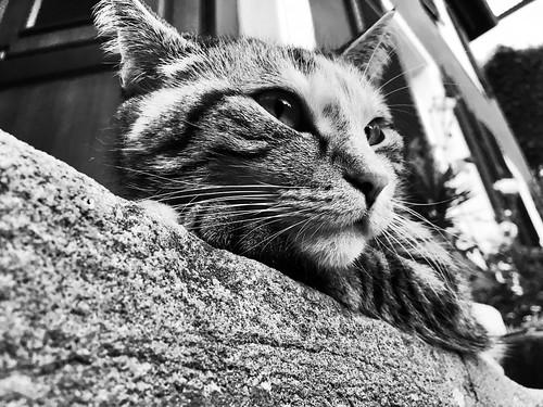 #cat #katze #blackandwhite