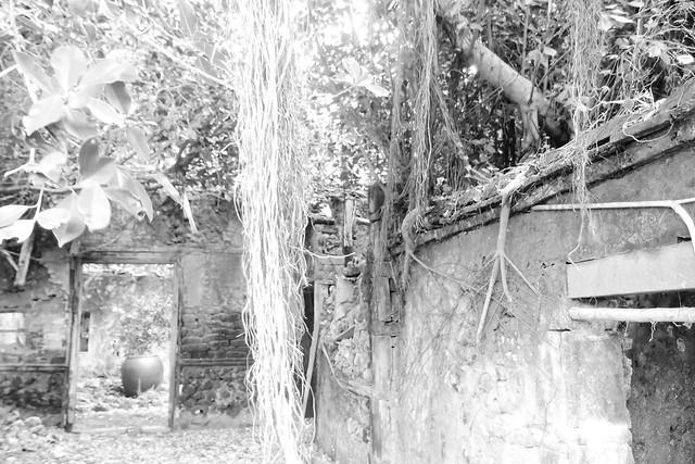 20170602拍攝於南寮077