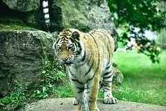 Marwell Zoo Visit
