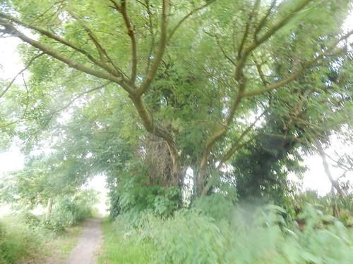 Wishy washy tree