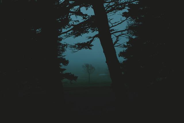 treedream