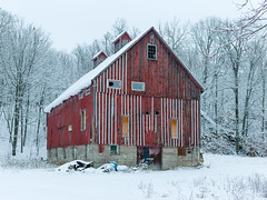 Red Barn And Snow Covered Trees