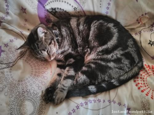 [Reunited] Mon, May 22nd, 2017 Lost Male Cat - Riverwalk Area Behind The Day Care Centre, Collooney, Sligo