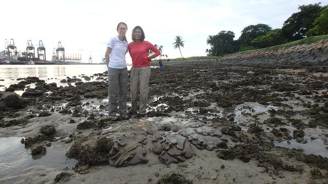 Living reefs of Sentosa Serapong, May 2017
