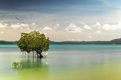 Palawan Philippine