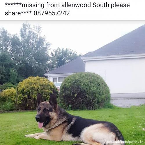 Thu, Jun 15th, 2017 Lost Male Dog - Allenwood South, Kildare