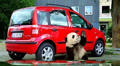 Fiat Panda und Co