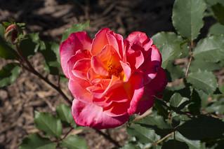 Brookside Gardens  (55)