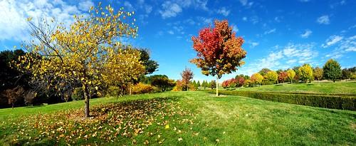 Autumn in Oberon