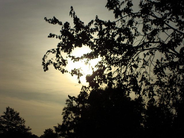 Thursday Morning., Sony DSC-W230