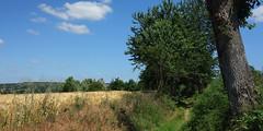 Le menhir dit « La Pierre Longue » près d'Iffendic - Ille-et-Vilaine - Juin 2017 - 01 - Photo of Boisgervilly
