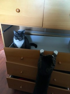 Kitties exploring my broken dresser