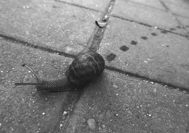 Snail trail - Madrid (2017)