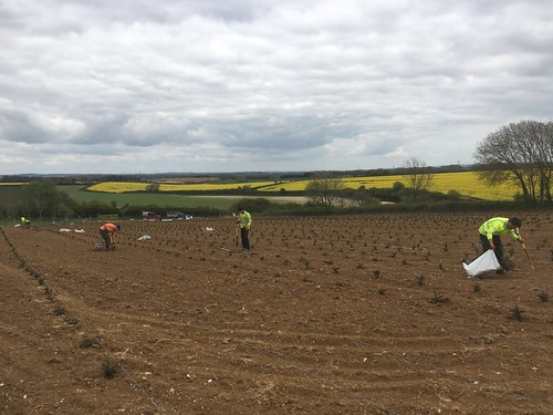 Planting a few Christmas Trees for Trinity Street Christmas Trees in Dorset. | by Knighton Countryside