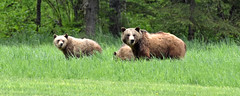 A Grizzled Family