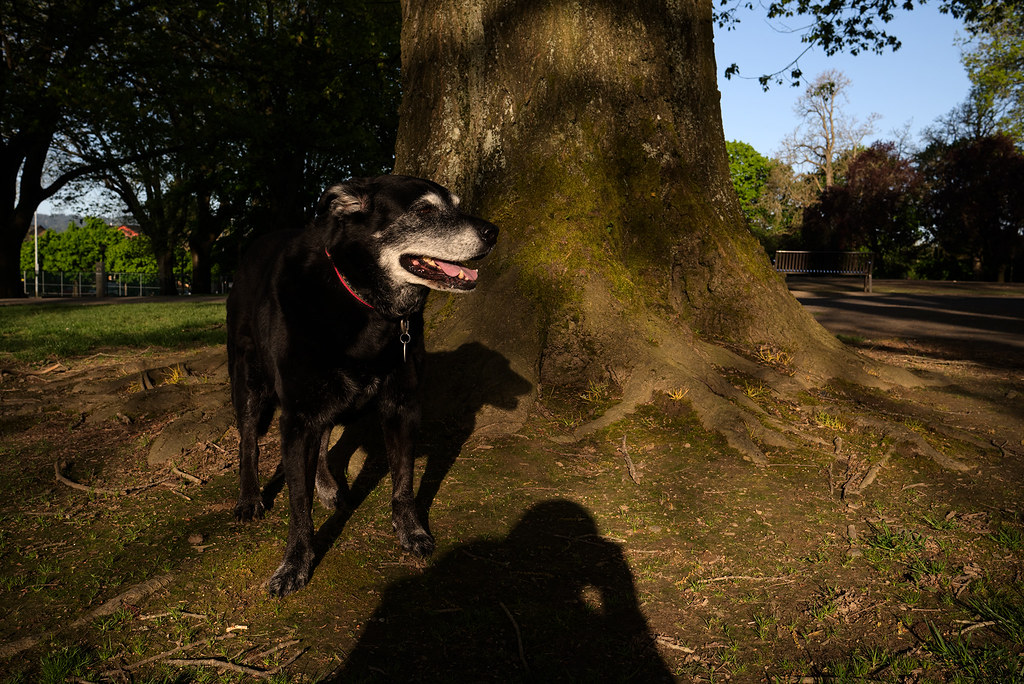 Our dog Ellie poses in front of a tree on a sunny spring morning in Portland, Oregon